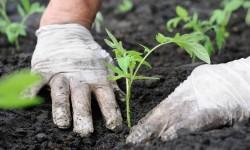 Lavori di manutenzione del verde - Nuovi Orizzonti