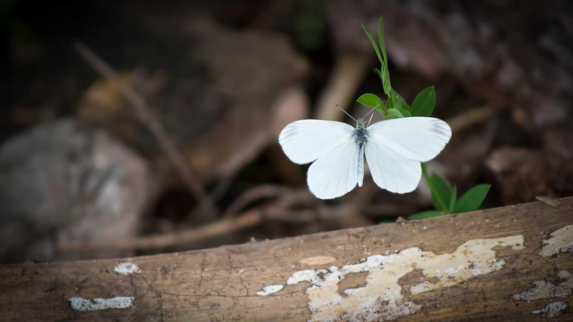 Maria... La farfalla Bianca - Nuovi Orizzonti
